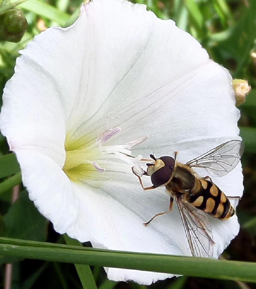 Photo in Macro #macro #fly