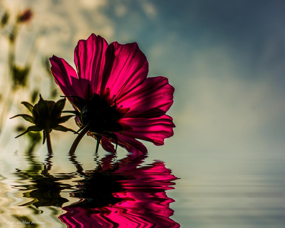 Photo in Abstract #abstact water flower macro  #nature