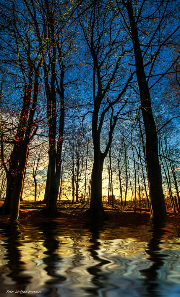 Photo in Abstract #abstract trees kristiansand