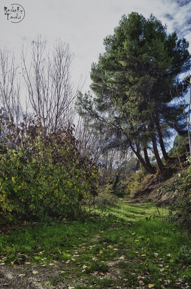 Photo in Random #green #tree