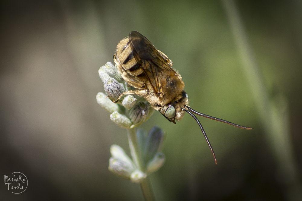 Photo in Macro #insecto #polen #macro