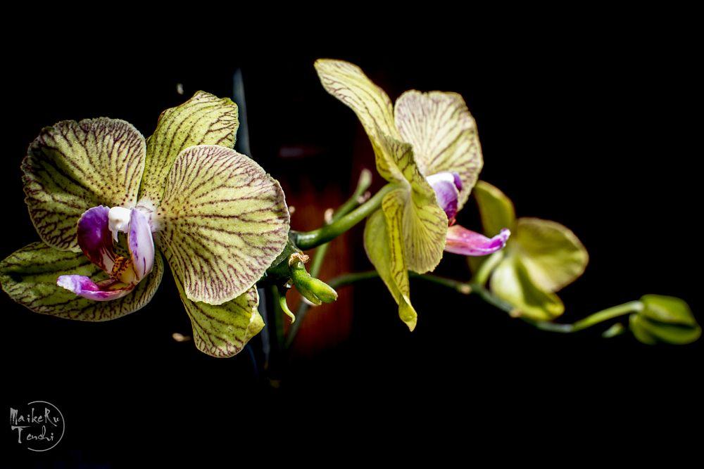 Photo in Random #orquideas #flor #detalle