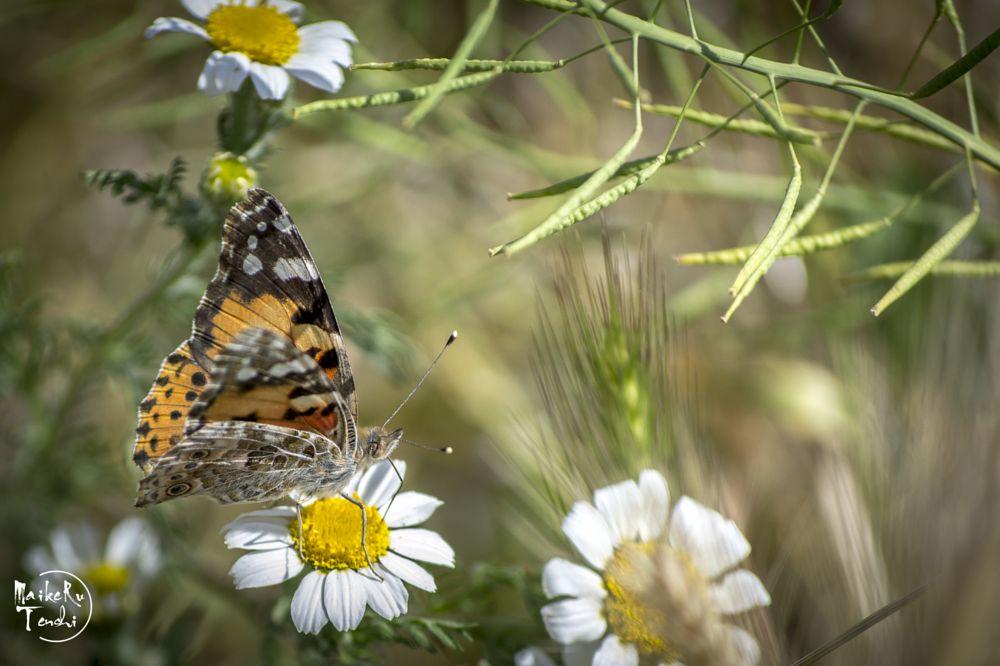 Photo in Animal #monarca #mariposa