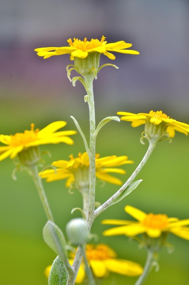 Photo in Macro #flower #plant #yellow #nature #macro #planta #james #king #b-king #d3200 #nikon #scotland