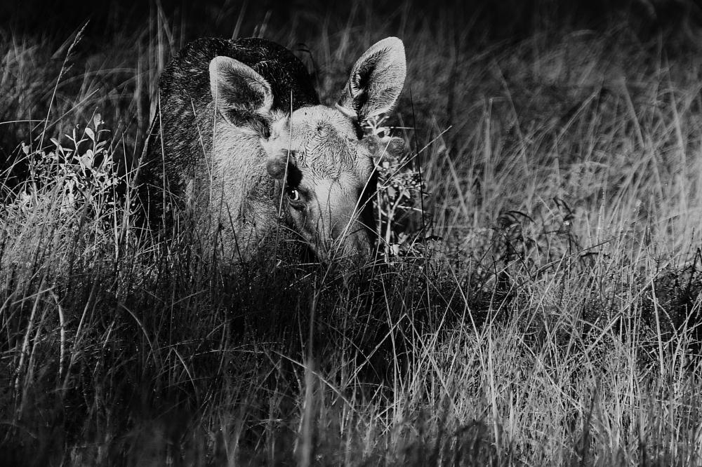 Photo in Nature #elk nature
