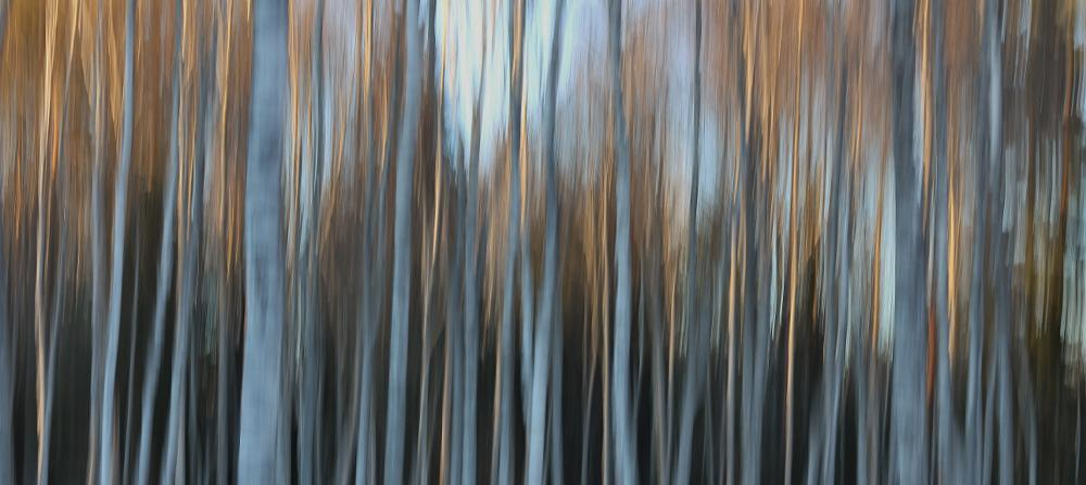 Photo in Nature #winter #abstract #trees
