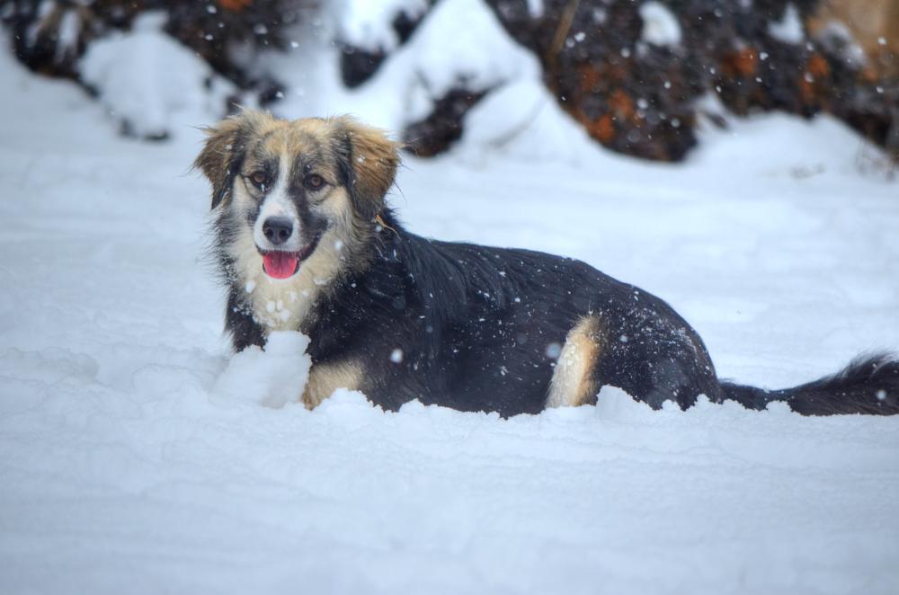 Photo in Animal #dog #snow