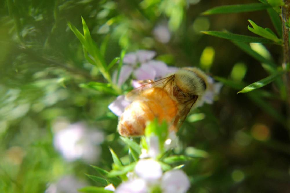 Photo in Animal #bee #close up #buzz