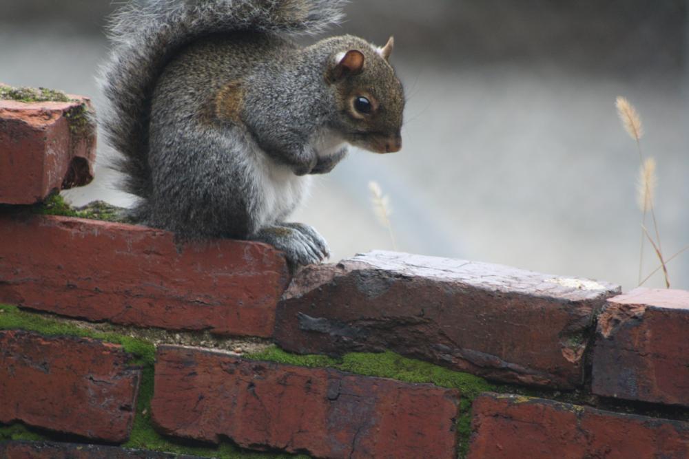 Photo in Animal #animals #nature #squirrels