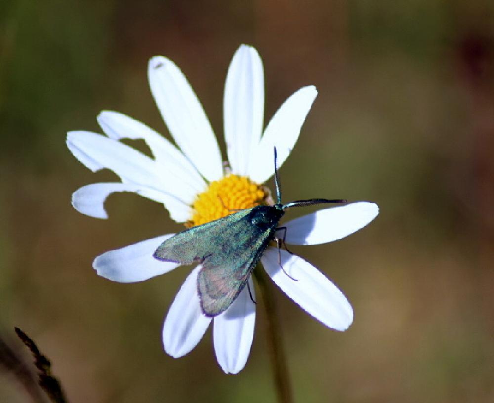 Photo in Random #flowers nature summer