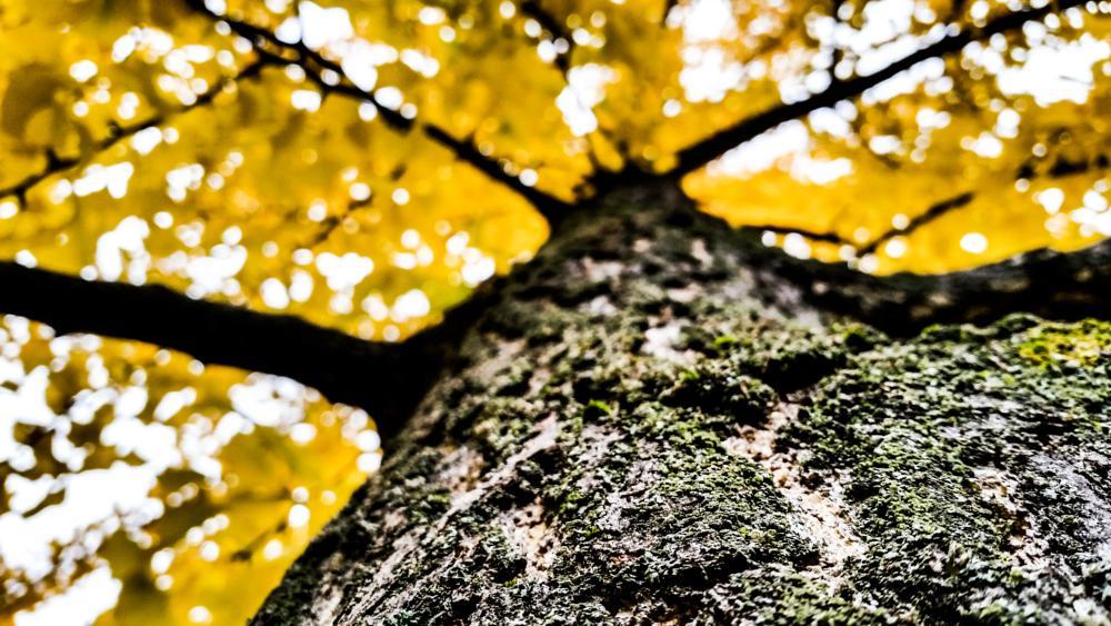 Photo in Nature #tree autumn