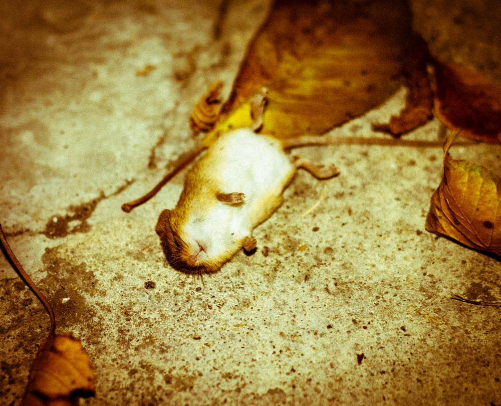 Photo in Animal #death of a mouse