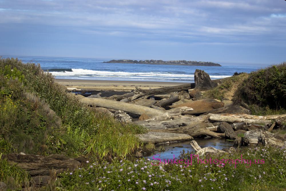 Photo in Landscape #oregon #coast #beach