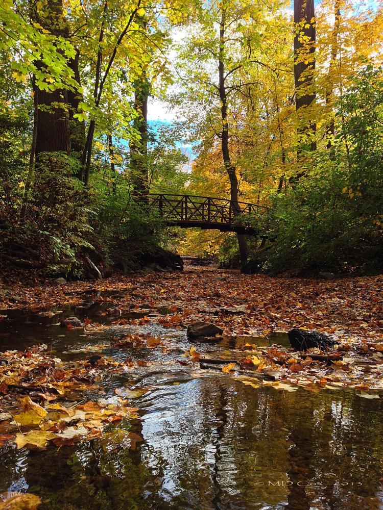 Photo in Landscape #sligo creek #stream #autumn #fall colors #bridge