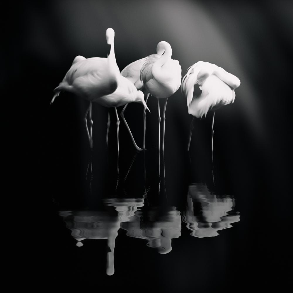 Photo in Black and White #nature #art #bw #black and white #animal #fine-art