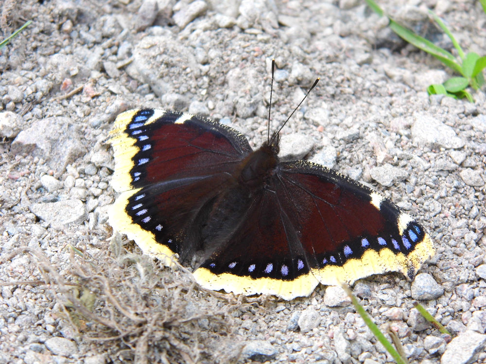 Photo in Random #butterfly #summer #finland