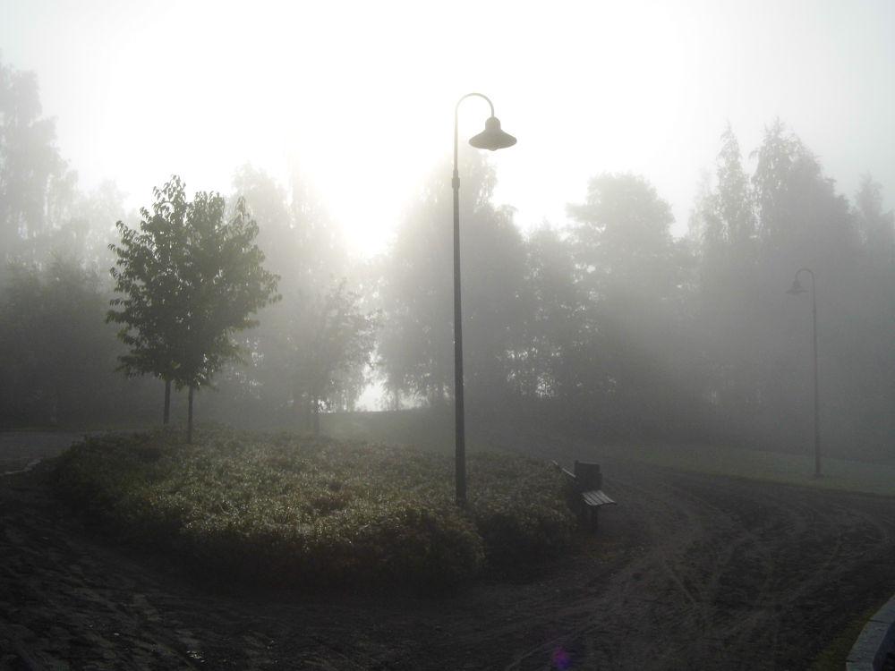 Photo in Random #fog #misty #bench