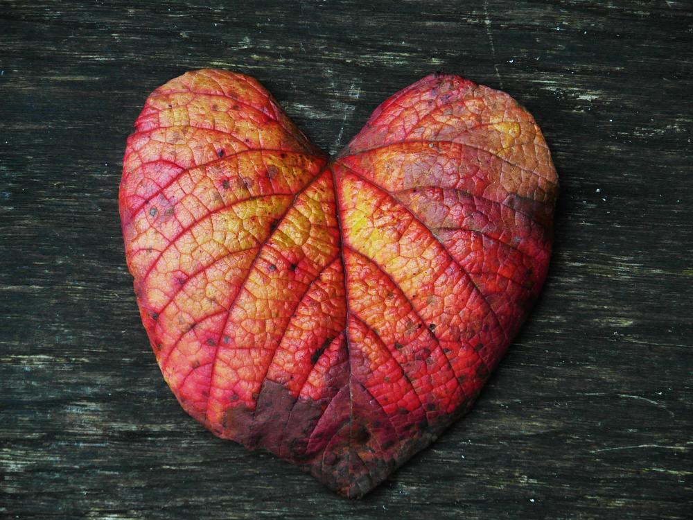 Photo in Nature #autumn #fall #colours #colors #love #heart #leaf #red
