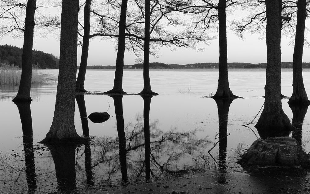 Photo in Black and White #reflection #black and white #sea #sweden