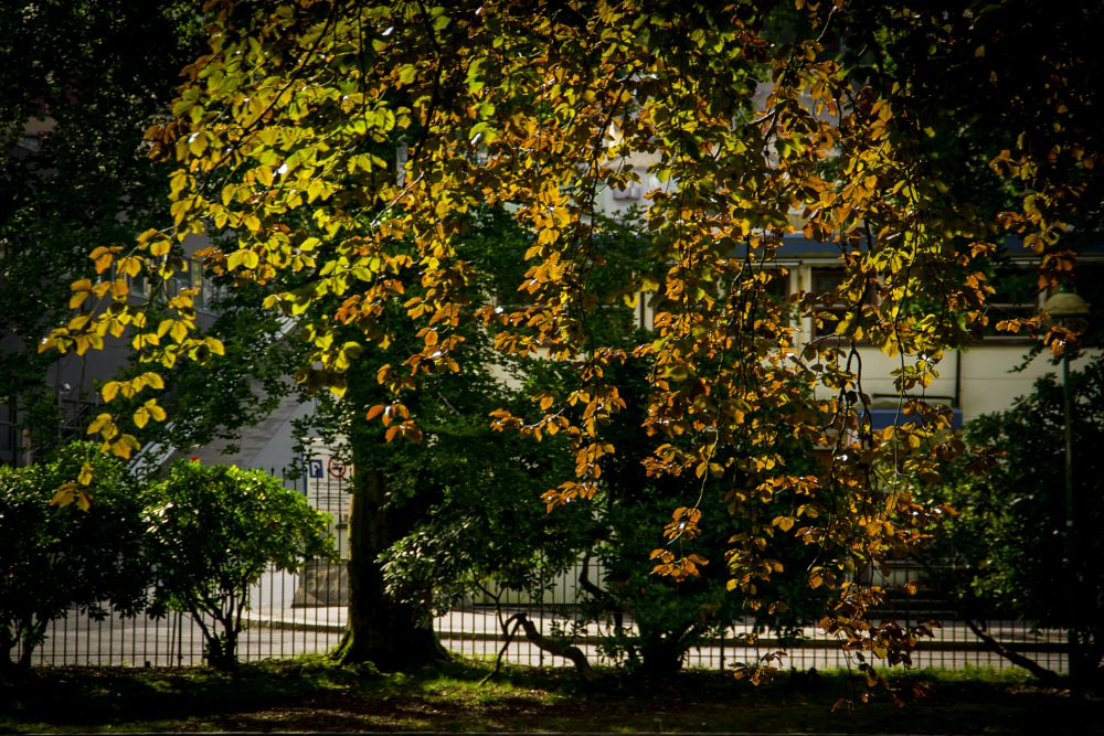 Photo in Nature #autumn #fall #leaves #trees #sun #sunshine #colours #golden #yellow #orange #park #bergen #norway #seasons