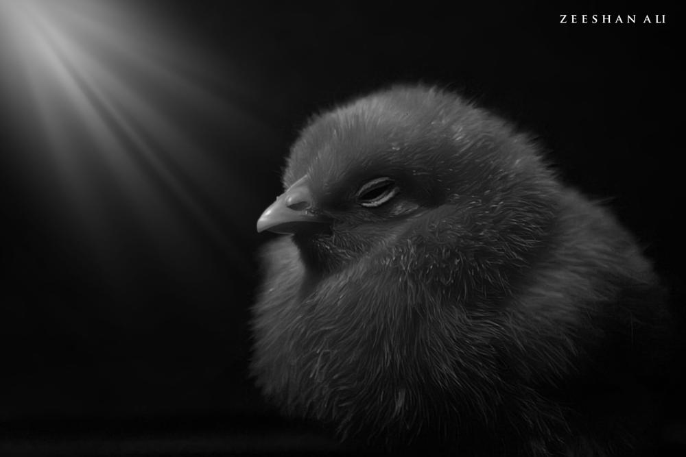 Photo in Black and White #chick #mystic #bandw
