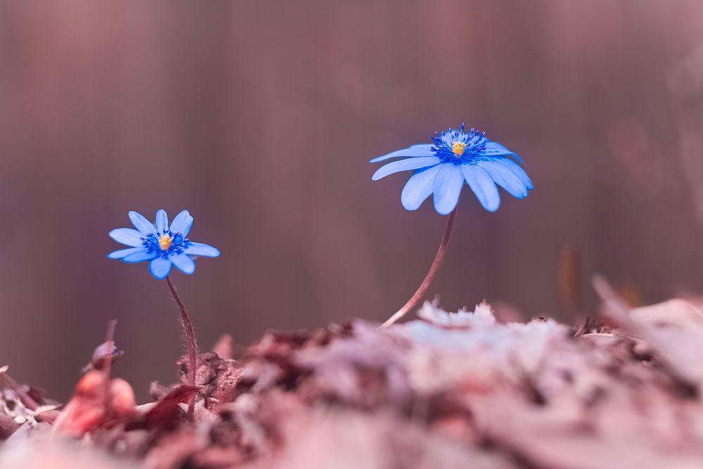 Photo in Macro #spring wild flower