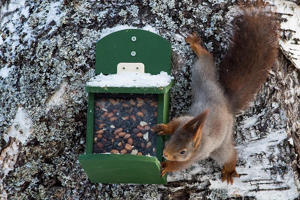 Photo in Animal #squirrel #winter #feeding