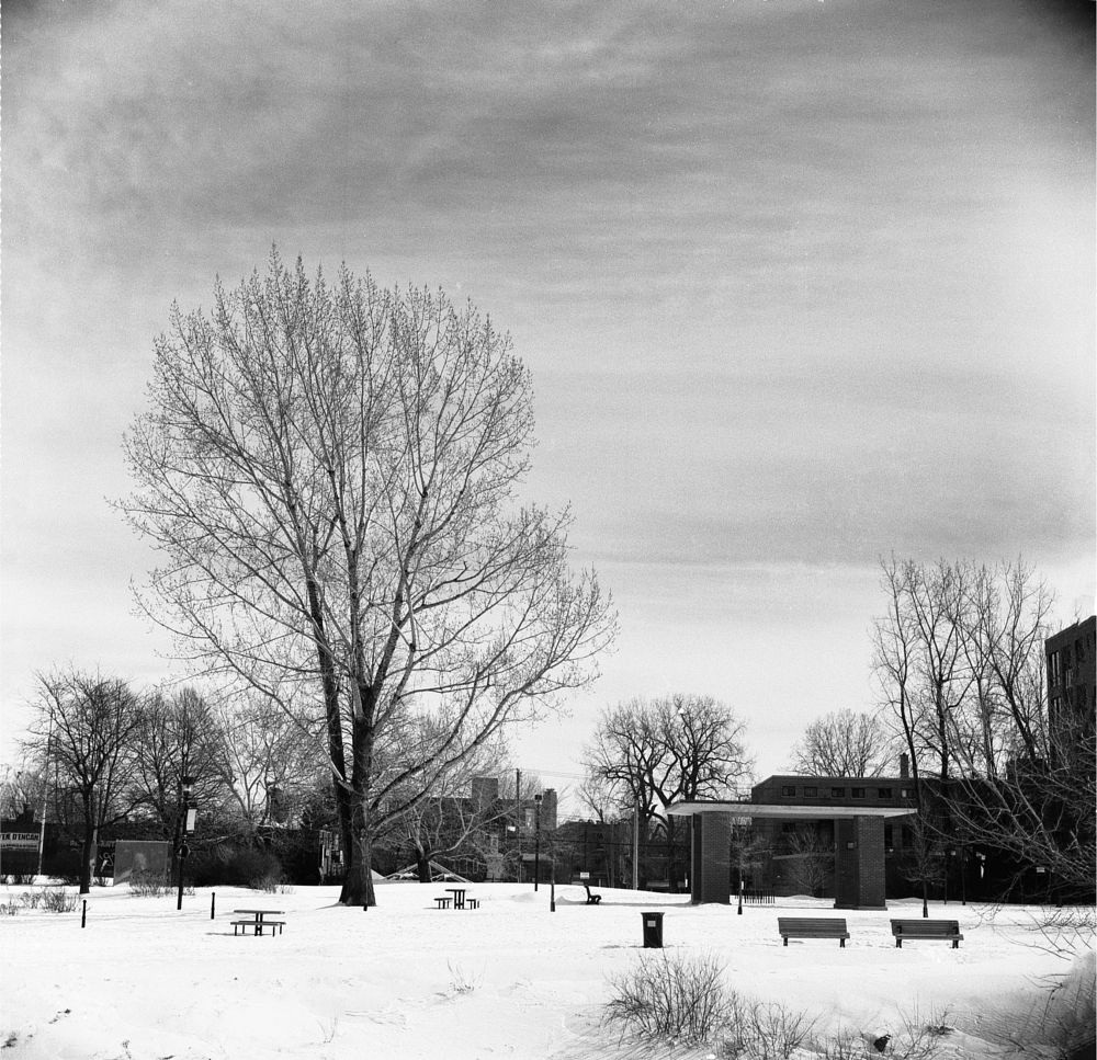 Photo in Black and White #black and white #analog #film #medium format #winter #snow #urban #landscape #montreal #canada