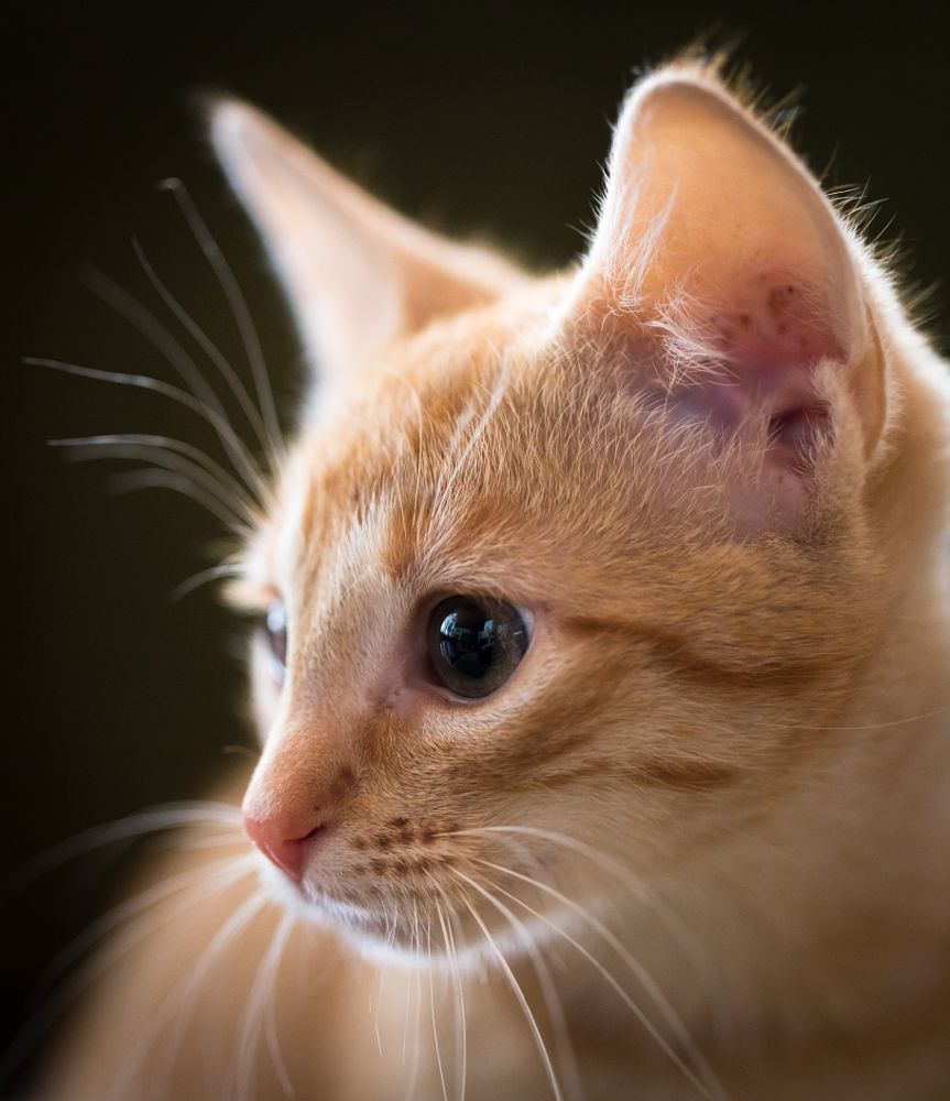 Photo in Animal #kitten #portrait
