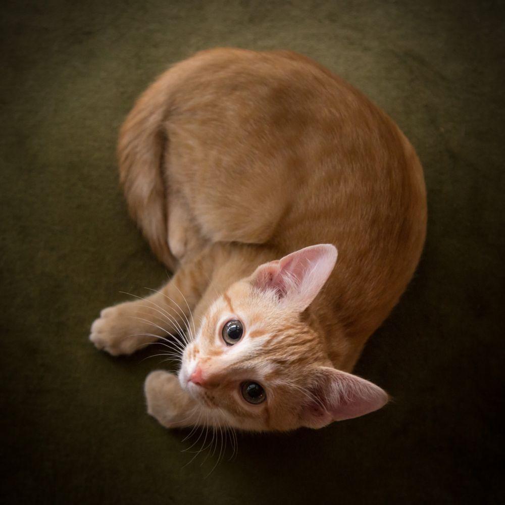 Photo in Animal #kitten