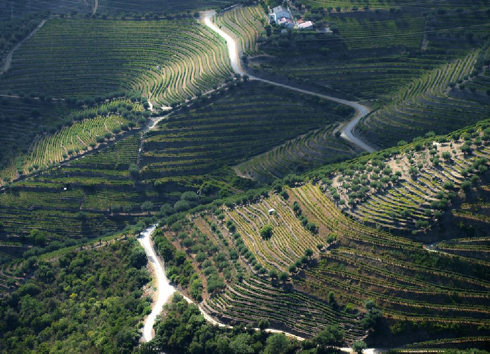 Photo in Travel #dourovalley #vineyards #unesco #patrimony #heritage #wine #portwine #portugal #grappes #landscape #travel #vilareal #douroriver #riverside #voyages #viagens #trip #vacation #holidays #beautiful #aerial_view #beautiful_destinations