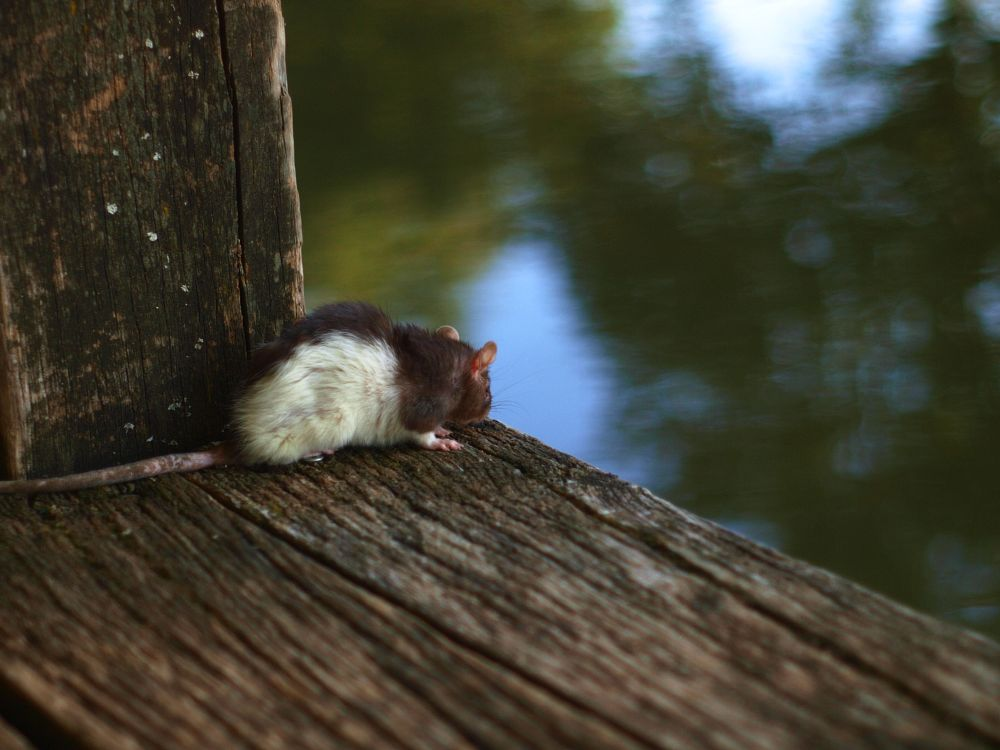 Photo in Nature #nature #biodiversity #canal #france #canalwater