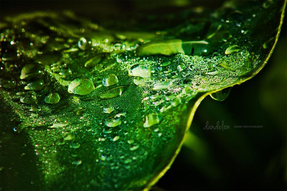 Photo in Nature #raindrops #nature #leaf
