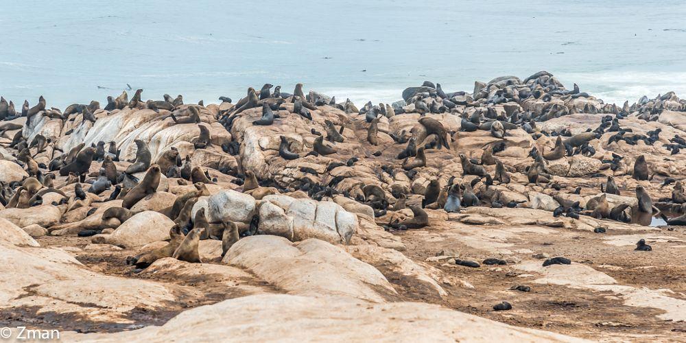 Photo in Animal #seals #colony #atlantic #ocean #skeleton #coast #namibia #workshop