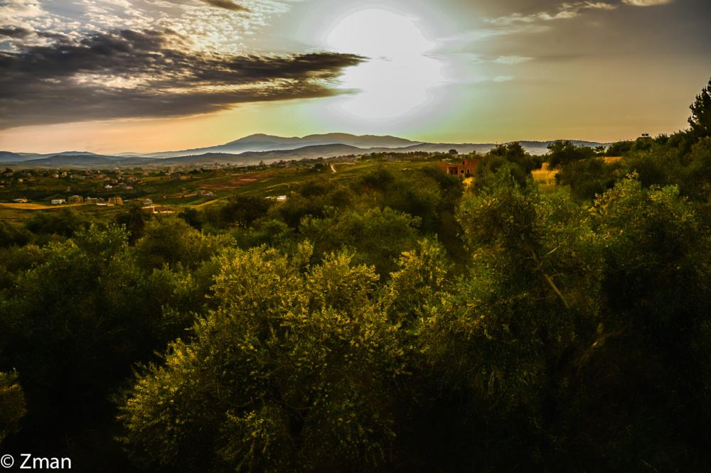 Photo in Landscape #olive trees #sunrise #sawaneh #our place