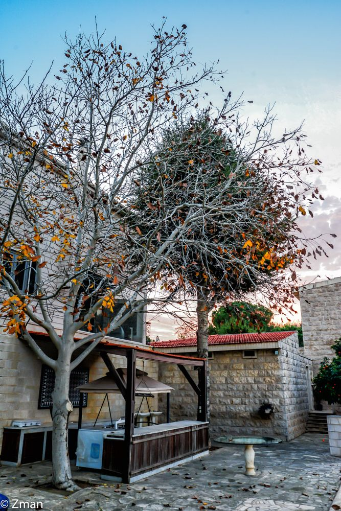 Photo in Landscape #winter #trees #sawaneh #our place