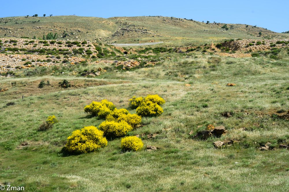 Photo in Landscape #wild #flowers #dar albeidar