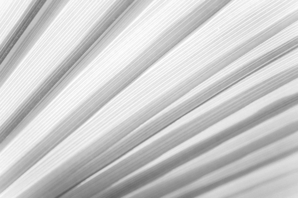 Photo in Abstract #pinstripes #pin striped #bw #palm #leaf