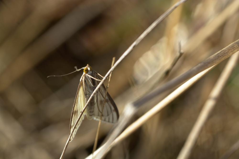 Photo in Macro #butterfly #papillon