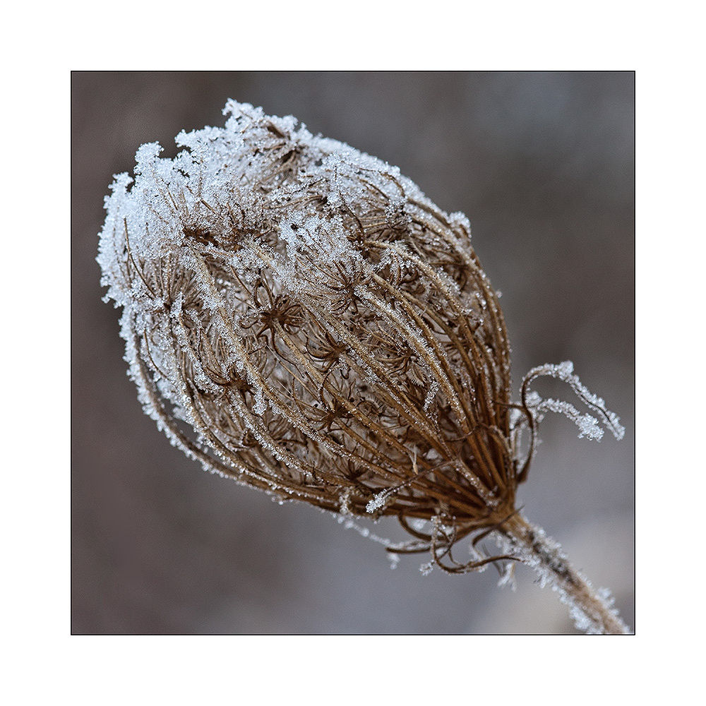 Photo in Nature #ice #winter #time #flower #nature #andreas napravnik