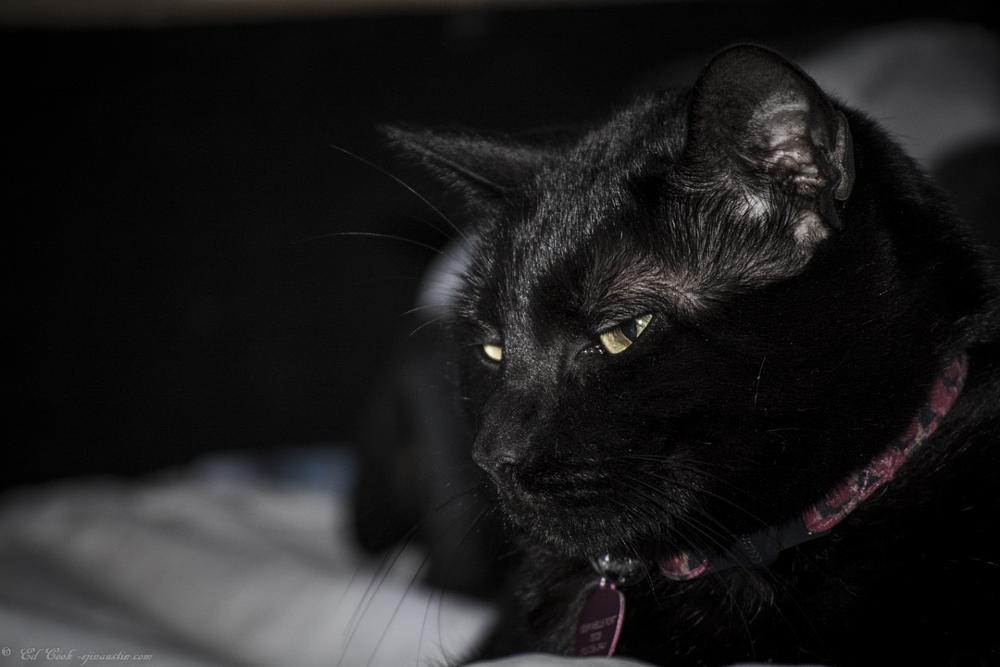 Photo in Animal #cat #pet #animals
