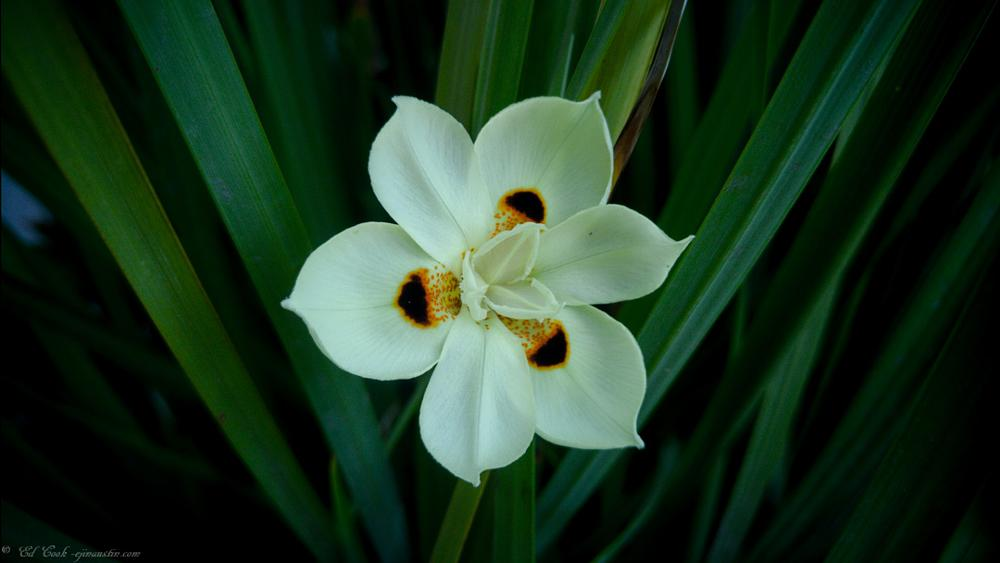 Photo in Nature #austin #flower #texas