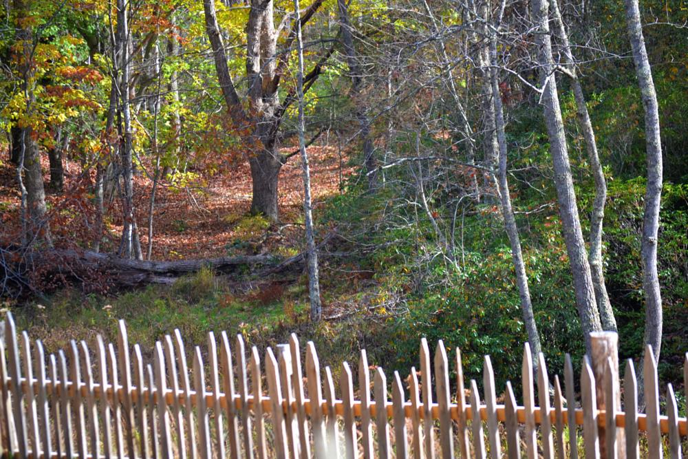 Photo in Landscape #fence #tree's #leaves