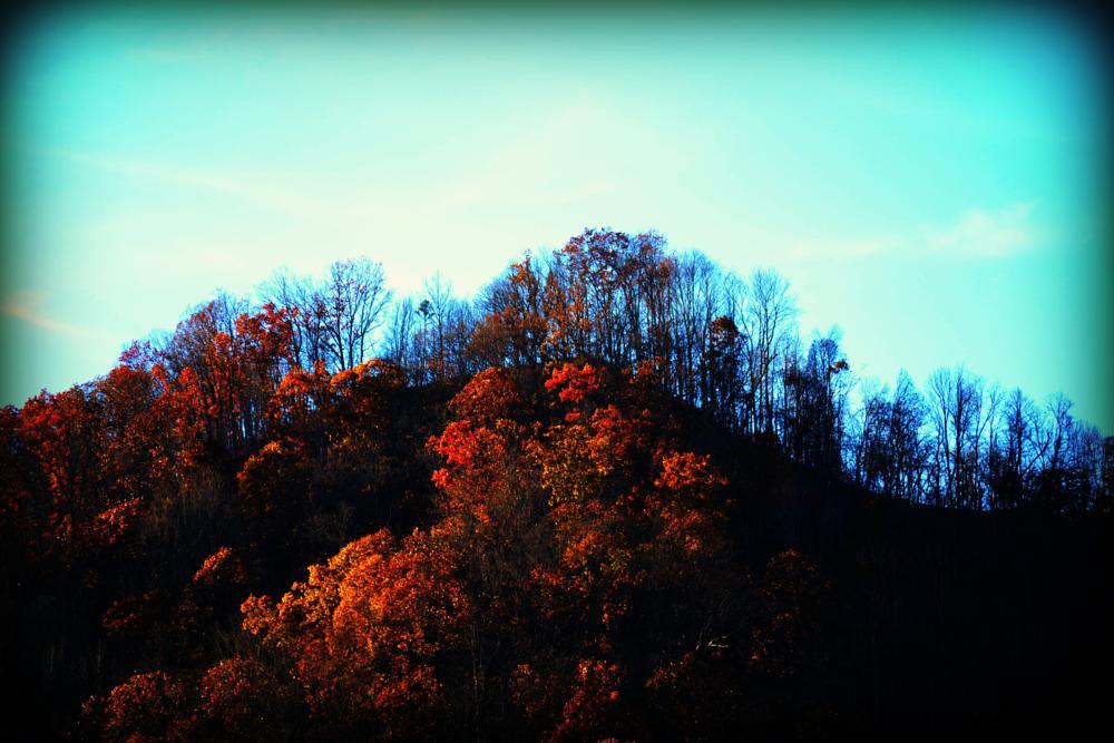 Photo in Landscape #mountain #trees #beautiful