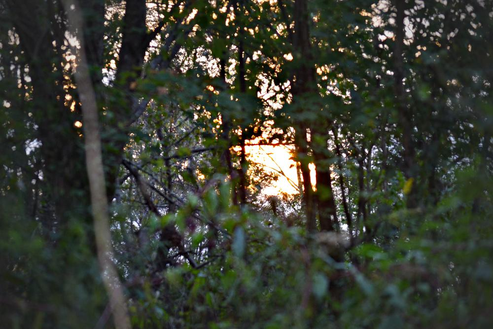 Photo in Nature #sunset #trees #mountain #leaves