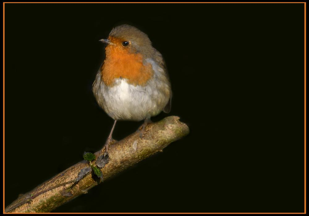 Photo in Nature #birds