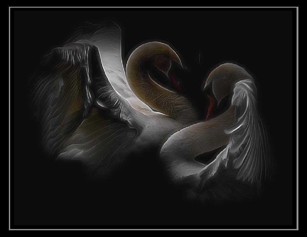 Photo in Nature #swans