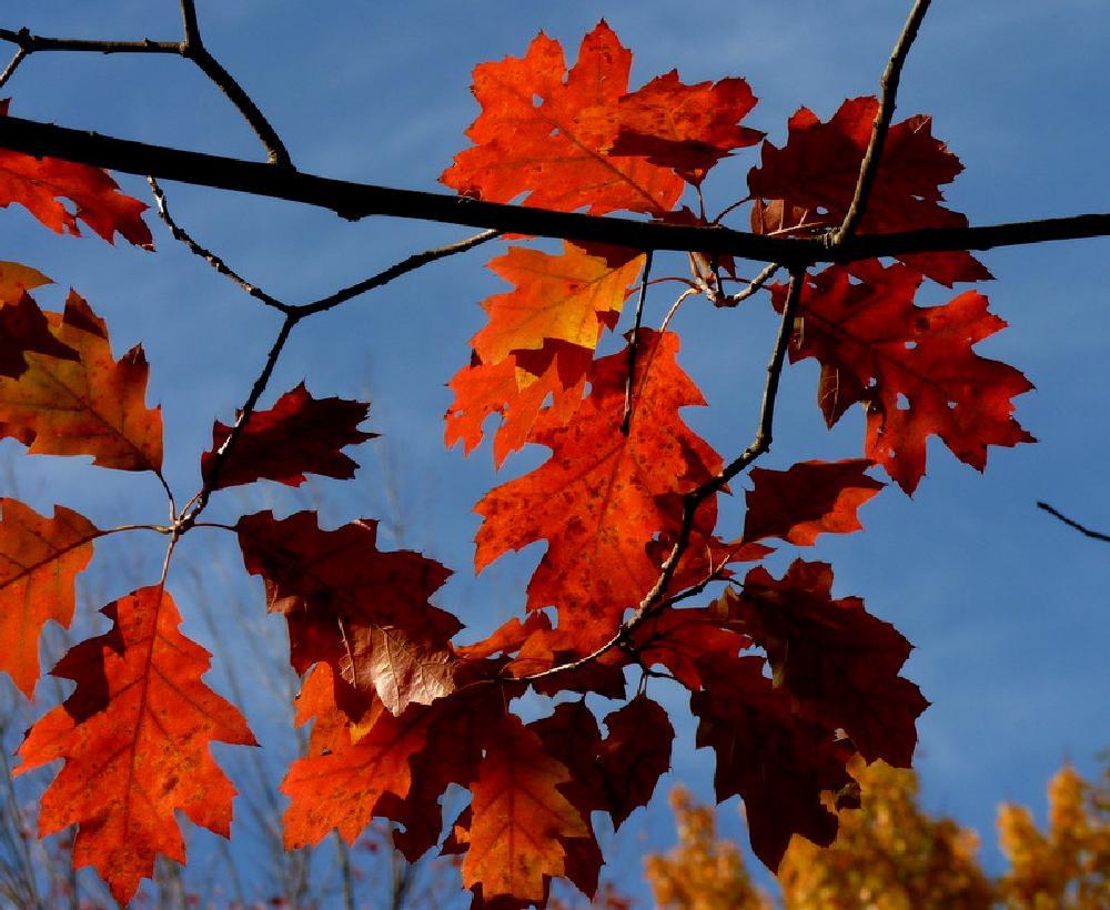 Photo in Random #leaves #fall #maine fall #colors