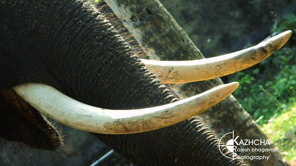 Photo in Animal #elephant #india