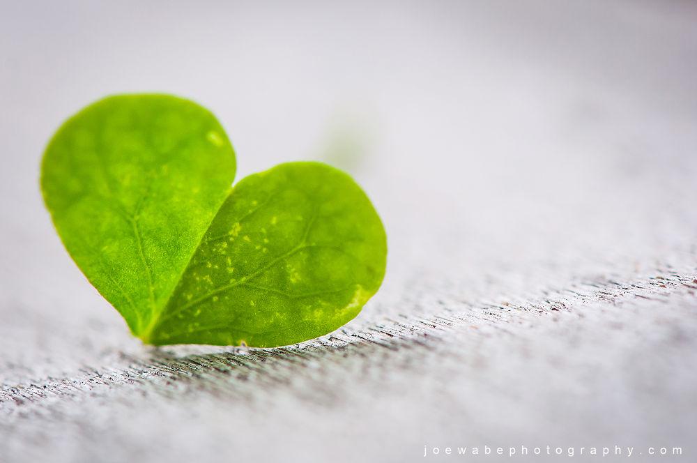 Photo in Macro #joe wabe #micro #leaf #leaves #summer